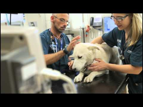 The University of Melbourne Veterinary Hospital video tour