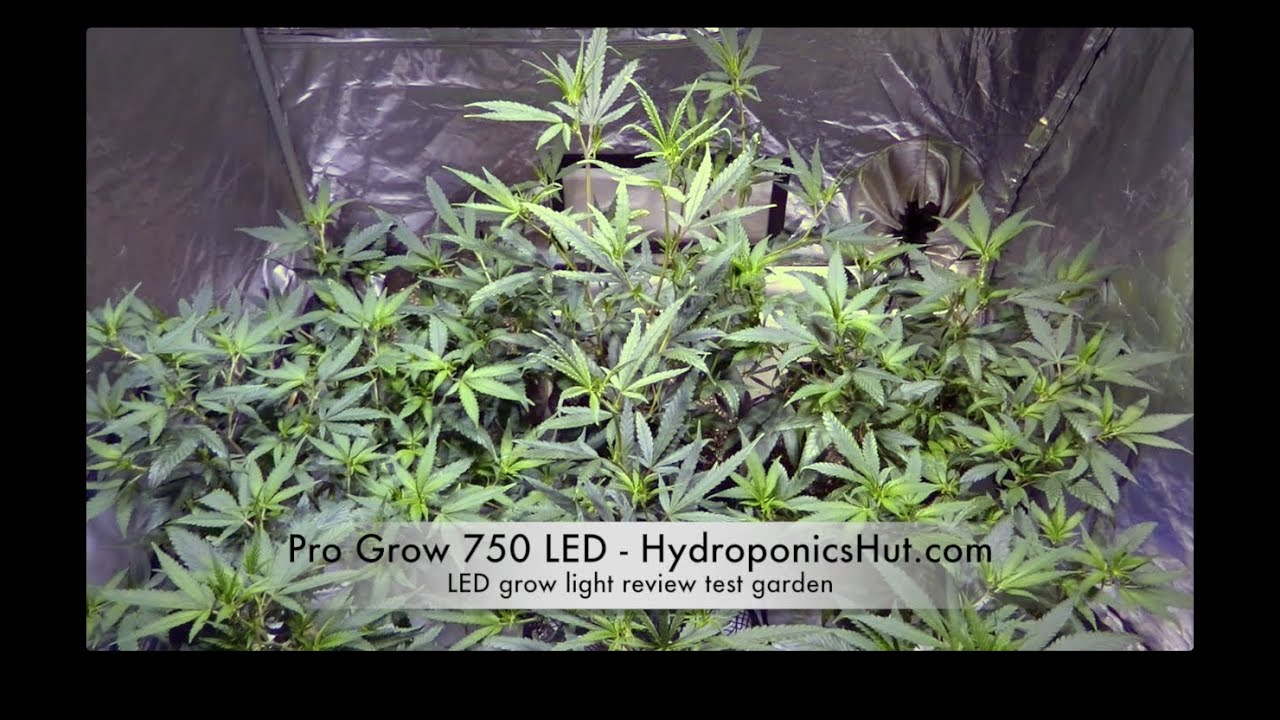 led grow light review pro grow 750 led updated model