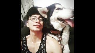 #2 Bucket List ng Mga Sawi ( Dogs Can Help)