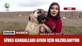 Sivas Kangalları Afrin için hazırlanıyor