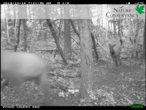 2013 Alberta Leaders in Conservation Wildlife Camera