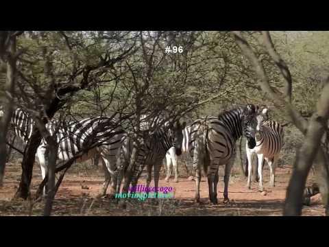African Wildlife Photo Safari  7   vid 96  720p