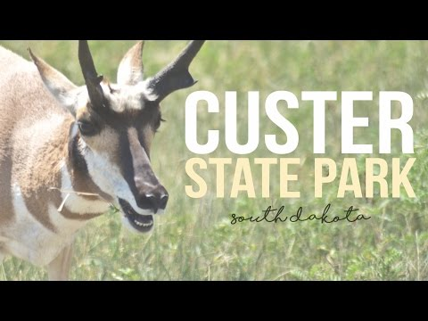 Exploring Custer State Park, South Dakota - a Drivin' & Vibin' Travel Vlog