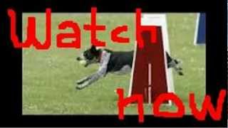 Dog Training Course - Dog Obedience - Perfect Pooch  Train At Home System