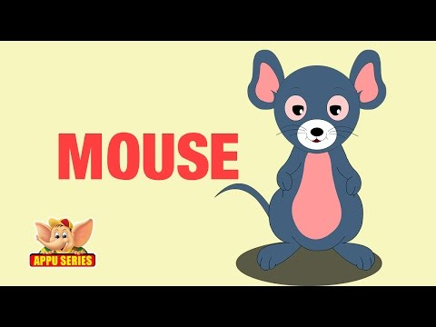 Animal Facts - Mouse