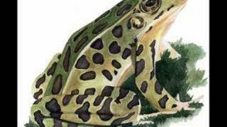 Play Froggie