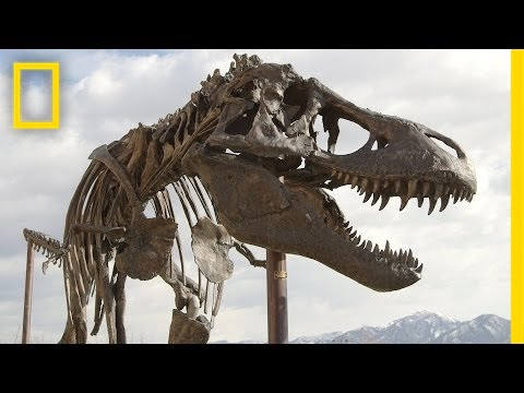 How a Giant T. Rex Packs for a Road Trip | National Geographic