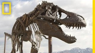 April 14, 2014---The Nation's T. rex, one of the most complete Tyra...