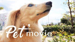 Pet'movie ペットムービー
