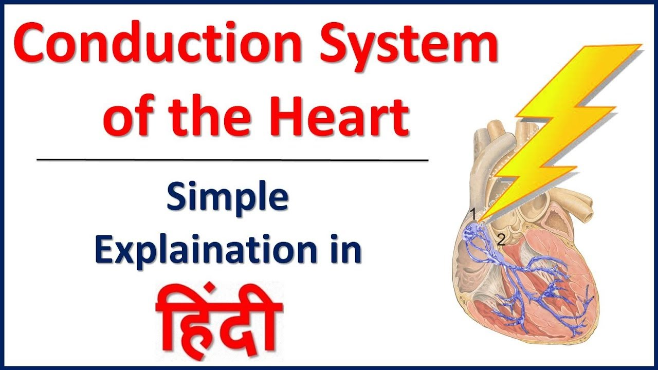 Conducting System Of Heart Simple Explaination In Hindi Bhushan