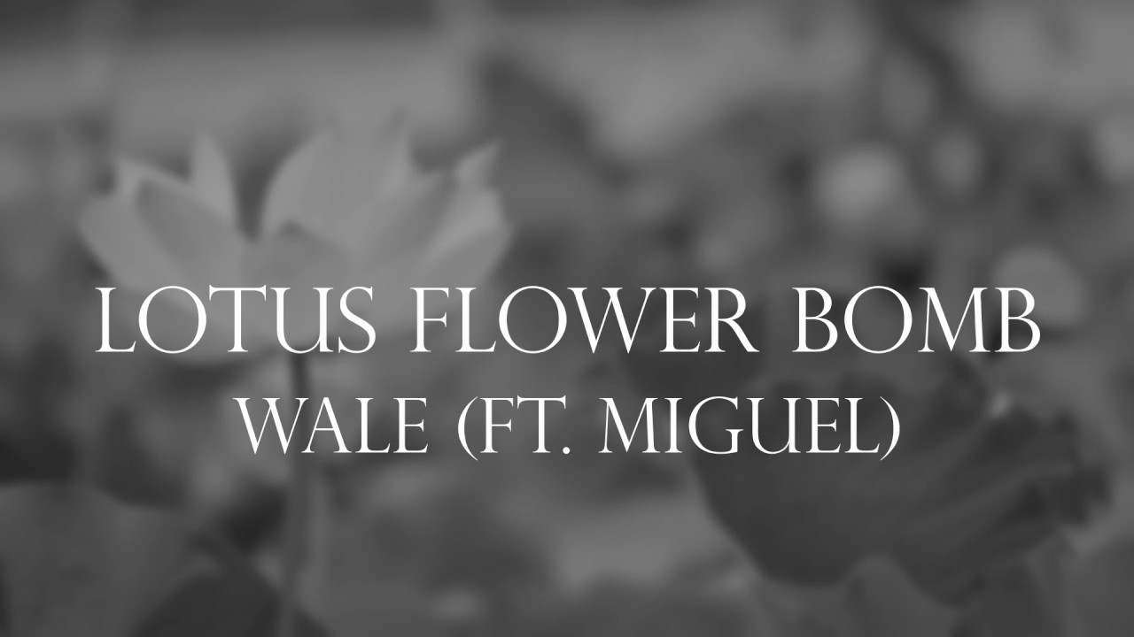 Wale Ft Miguel Lotus Flower Bomb Lyrics Choice Image Flower