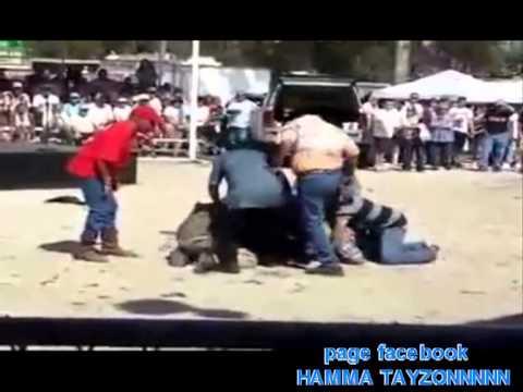 Vidéos De 7amma Tyson Chid Rou7ik Midha7k 2