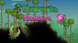 Terraria:Как Убить Плантеру за 20 секунд!