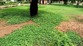 My lady Garden in Chennai