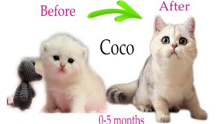 HOW kitty Сoco GROWS Up: from 05 months!