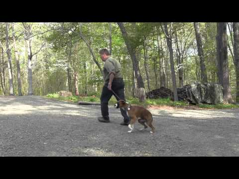 Dog Training Winston Salem