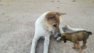 Dogs Playing - Dogs Videos - Cute Dogs - Funny Dogs - Dogs Funny Playing - Dogs
