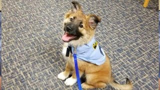 Чтобы взять этого щенка на работу, в полиции придумали новую должность