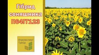 Подсолненик П64ГГ123  🌻, описание гибрида 🌻 - семена в Украине
