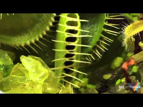 Equilibrio Carnivorous Plants Carnivorous Plants Venus Fly