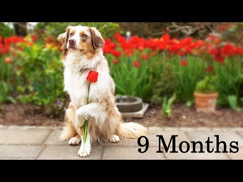 Spotty - Spring Time! | 9 Months (Tricks and Obedience)
