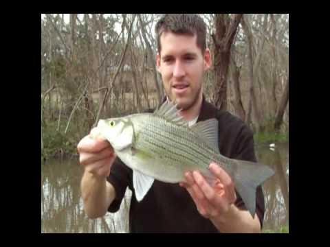 Fishing eagle lake texas youtube for Eagle lake texas fishing