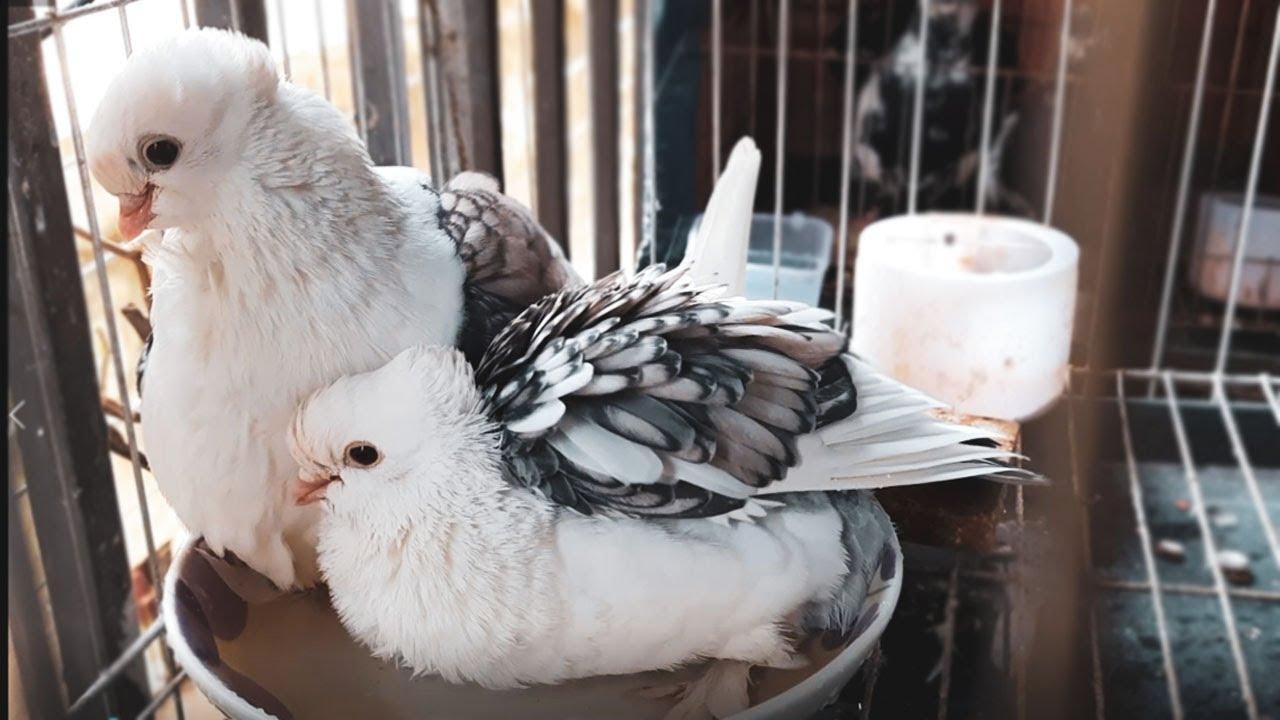 Bird bath inside cage