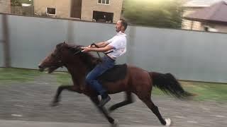 Single Footing Horse Keher (Balaken)
