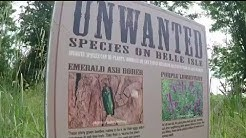 Don't help invasive species spread while you travel this summer