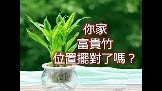 你家富貴竹位置擺對了嗎?