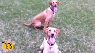 How NOT to Play FETCH  | The Best Cute, Funny Animal Videos Compilation #18 | AFV Pets