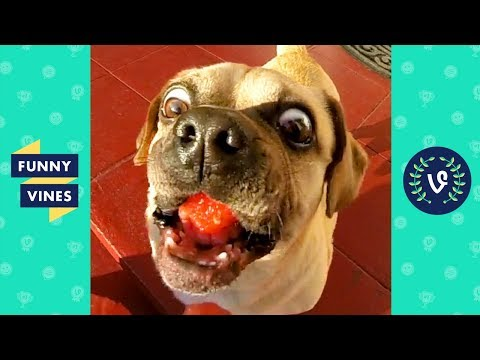 TRY NOT TO LAUGH – MUST WATCH FUNNY ANIMALS!