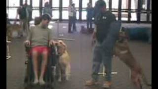 Sit Means Sit Dog Training Aids The Handicapped