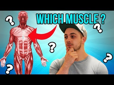 Can A Massage Therapist Pass THESE Muscle Anatomy Tests!?