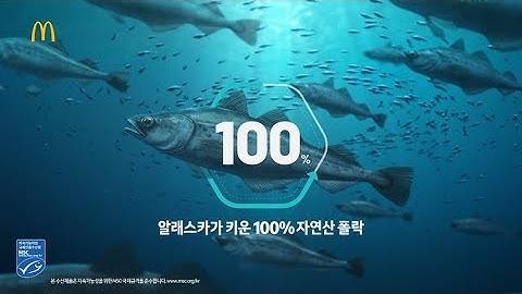 13년 만의 컴백, 필레 오 피쉬