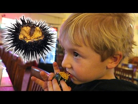 Trying Sea Urchin