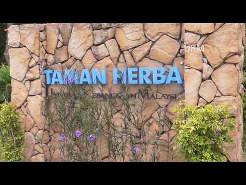 @Taman Herba UKM - Pokok Seringan