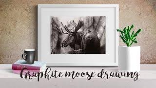 Moose - graphite pencil drawing time lapse