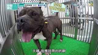 2016.04.03《寵物大聯萌》完整版 從優雅到狼狽全紀錄