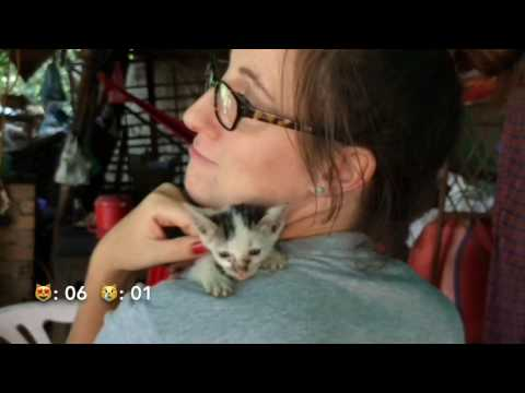 Street Cats Of Cambodia | Cat Lady Challenge