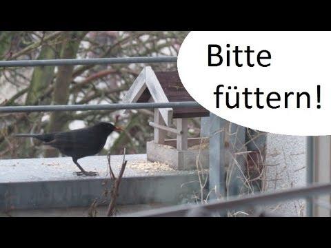 Vogel Futtern Ja Bitte Einfach Gunstig Futter Zubereiten