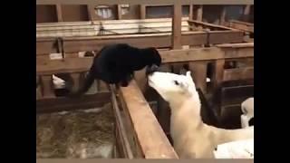 Mèo Ngáo Khiến Bạn Không Thể Nhịn Cười   Funny Cat Video TRY NOT TO LAUGH