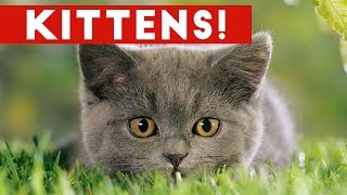 Funniest Cute Kitten Video Compilation 2016 | Funny Pet Videos