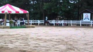 Cashlyn Lovell  on Road Pony at Charlotte Charity Horse Show