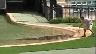 Australia Zoo. Шоу крокодилов - 2