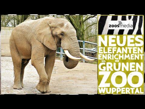 Zoo Wuppertal: Elefanten-Bulle TOOTH bekommt neues Enrichment | zoos.media