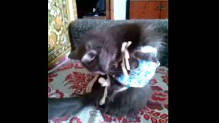 Не нравится попона кошке Дымка