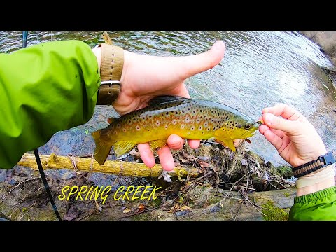 Spring Creek (State College PA) - ABUNDANT Wild Brown Trout