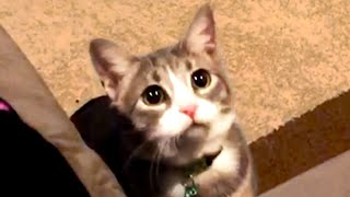 Cat Videos To Make Your Day! Cute and Funny Cats