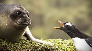 Funny Talking Animals [Funny Pets]